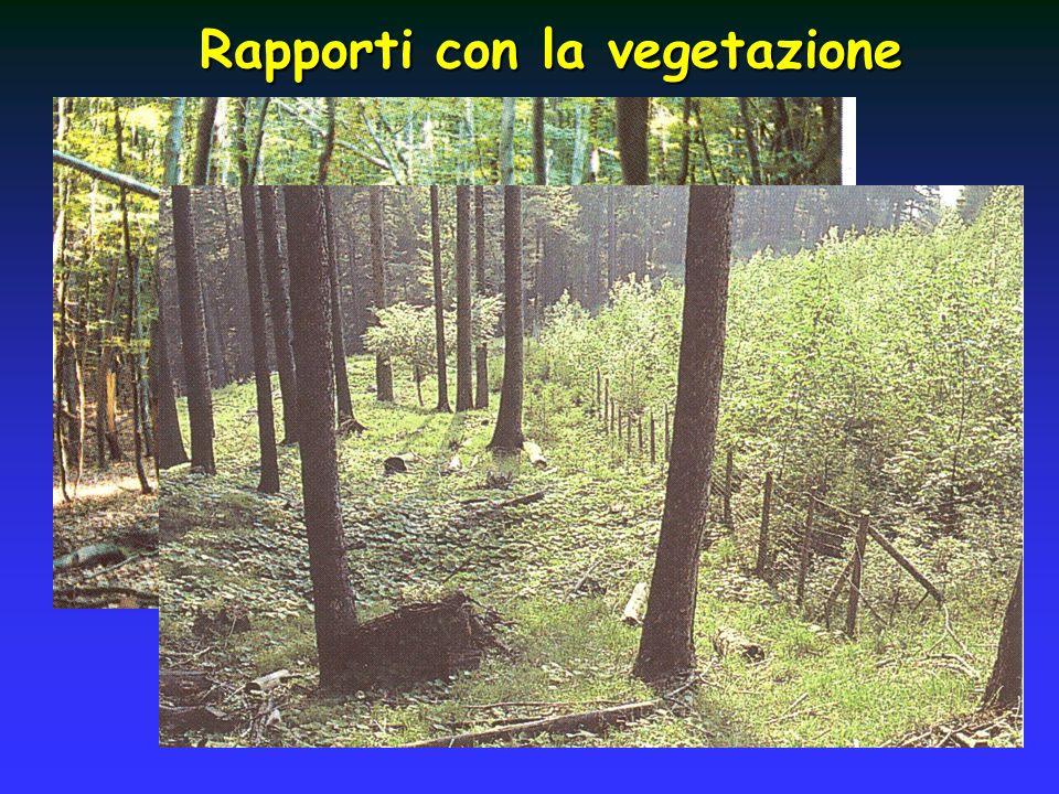 Rapporti con la vegetazione