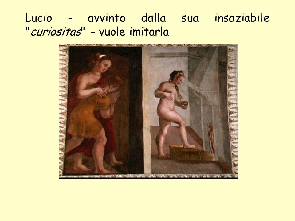 elenarovelli11 Ma sbaglia unguento, e viene trasformato in asino, pur conservando coscienza ed intelligenza umana.
