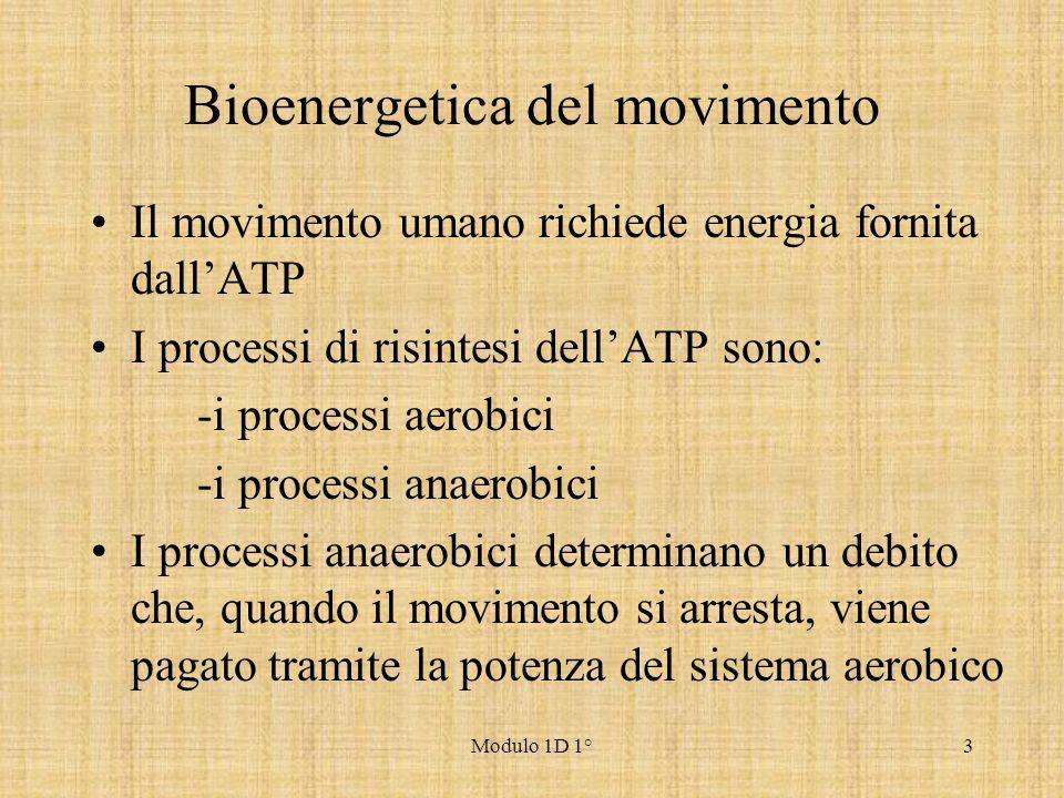 Modulo 1D 1°3 Bioenergetica del movimento Il movimento umano richiede energia fornita dallATP I processi di risintesi dellATP sono: -i processi aerobi