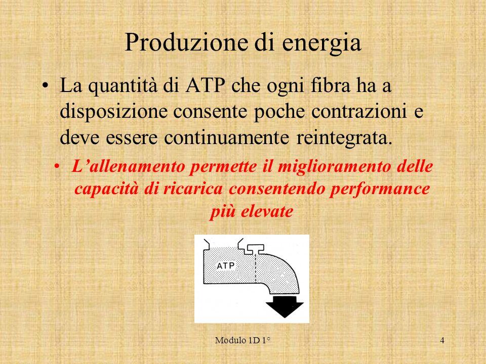 Modulo 1D 1°4 Produzione di energia La quantità di ATP che ogni fibra ha a disposizione consente poche contrazioni e deve essere continuamente reinteg