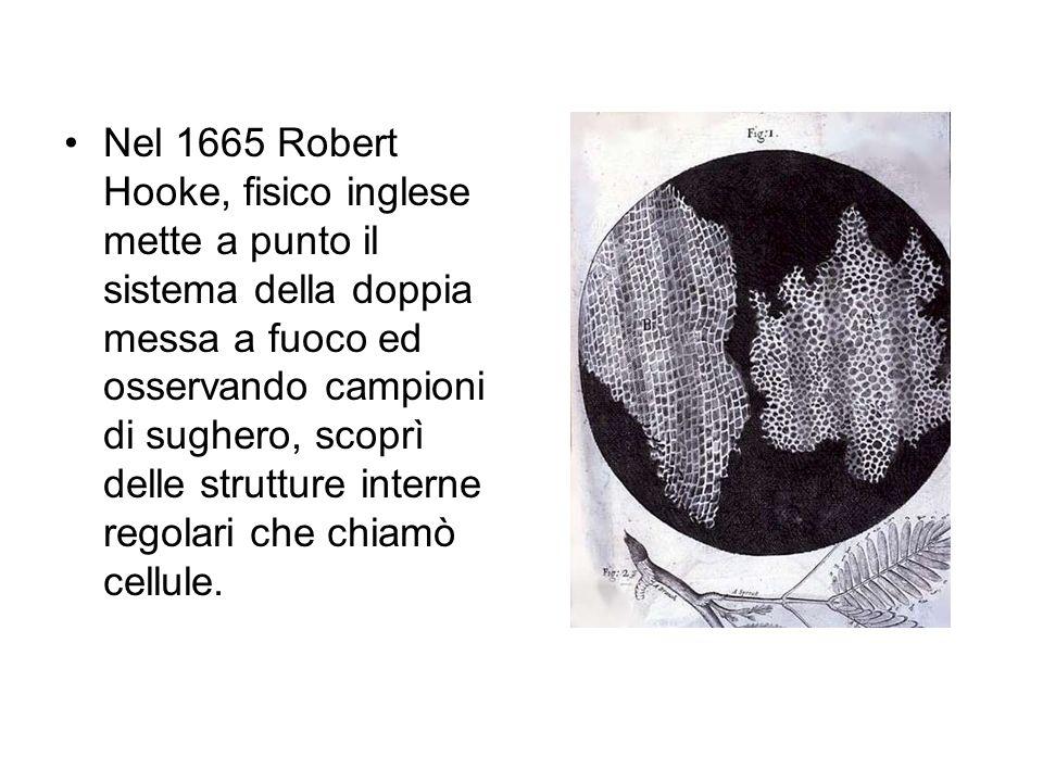 Nel 1665 Robert Hooke, fisico inglese mette a punto il sistema della doppia messa a fuoco ed osservando campioni di sughero, scoprì delle strutture in