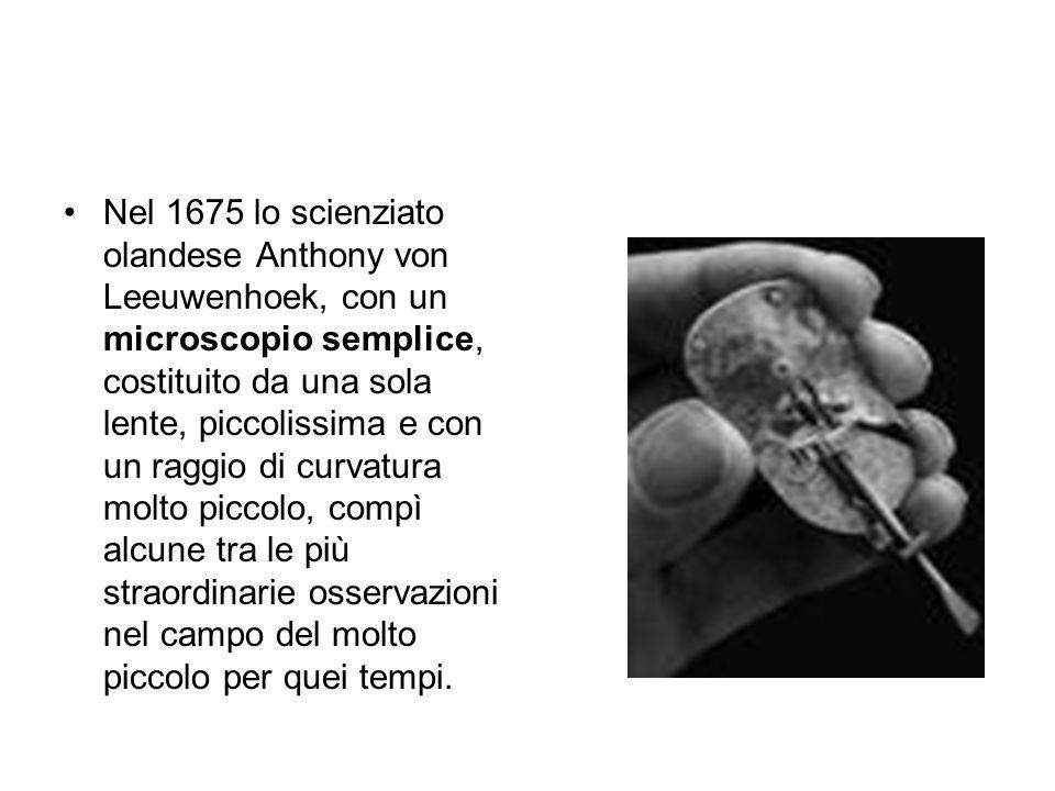 Nel 1675 lo scienziato olandese Anthony von Leeuwenhoek, con un microscopio semplice, costituito da una sola lente, piccolissima e con un raggio di cu