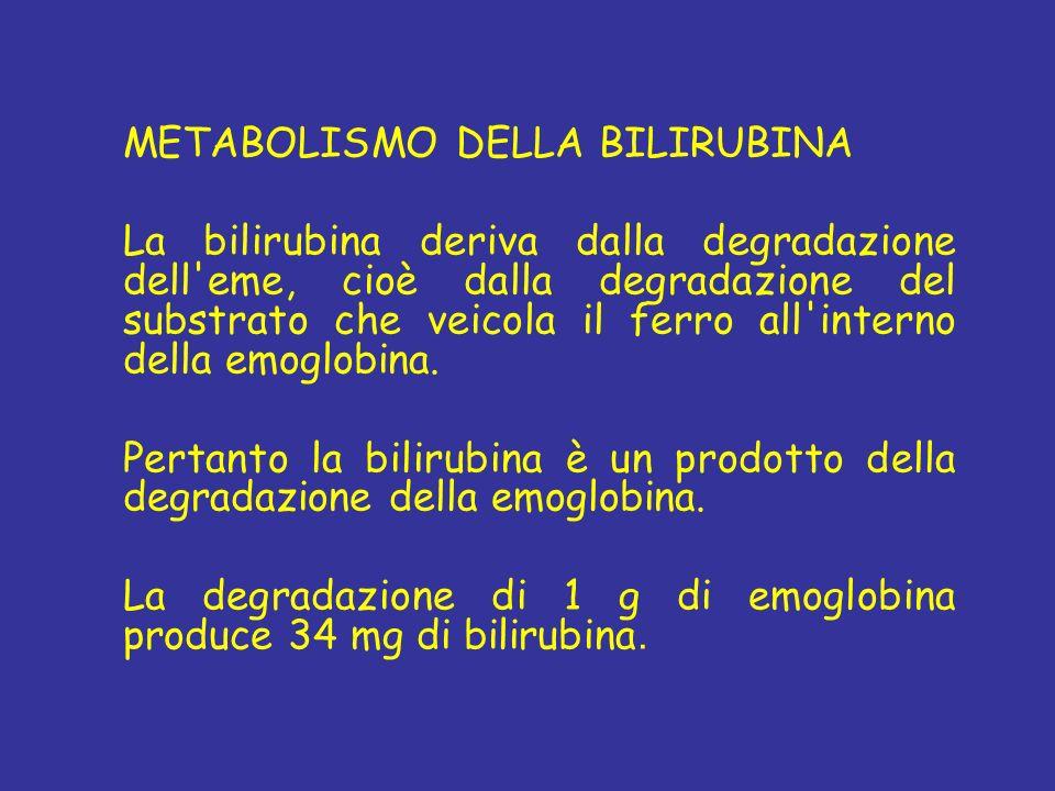 METABOLISMO DELLA BILIRUBINA La bilirubina deriva dalla degradazione dell'eme, cioè dalla degradazione del substrato che veicola il ferro all'interno