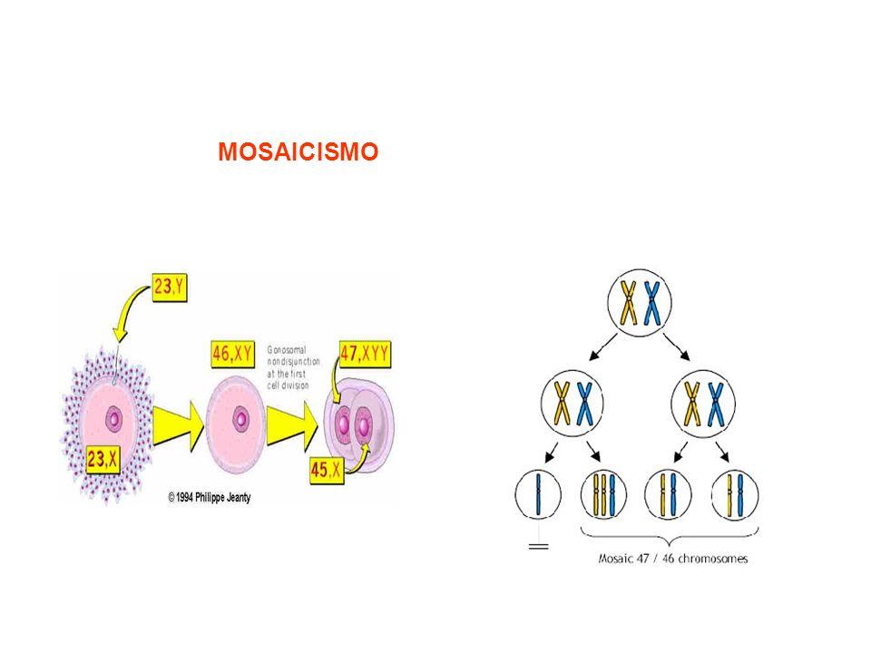 La non disgiunzione dei cromosomi 21 può anche verificarsi durante la divisione mitotica. Se questo avviene durante le prime divisioni cellulari dello