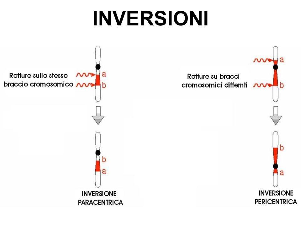 INVERSIONI