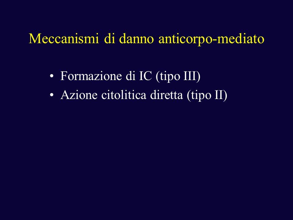 Meccanismi di danno anticorpo-mediato Formazione di IC (tipo III) Azione citolitica diretta (tipo II)