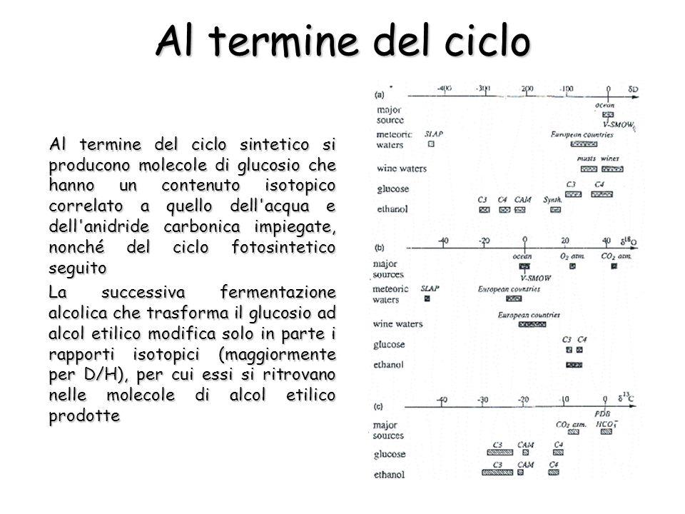 Al termine del ciclo Al termine del ciclo sintetico si producono molecole di glucosio che hanno un contenuto isotopico correlato a quello dell'acqua e
