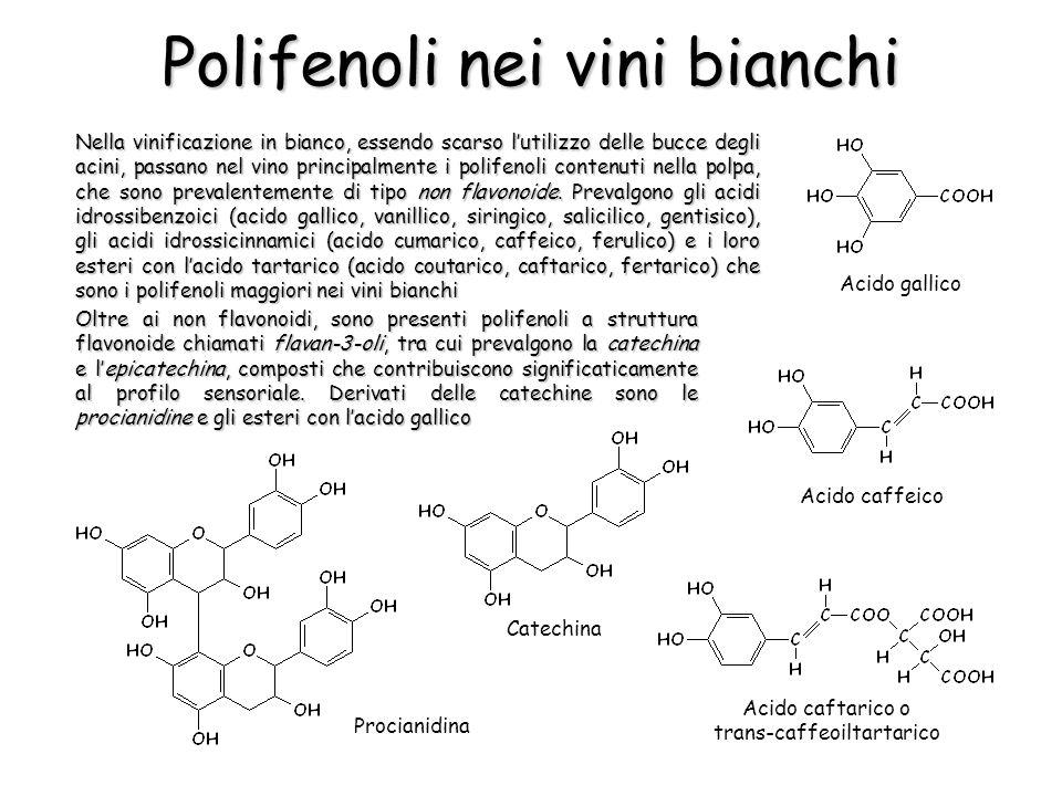 Nella vinificazione in bianco, essendo scarso lutilizzo delle bucce degli acini, passano nel vino principalmente i polifenoli contenuti nella polpa, c