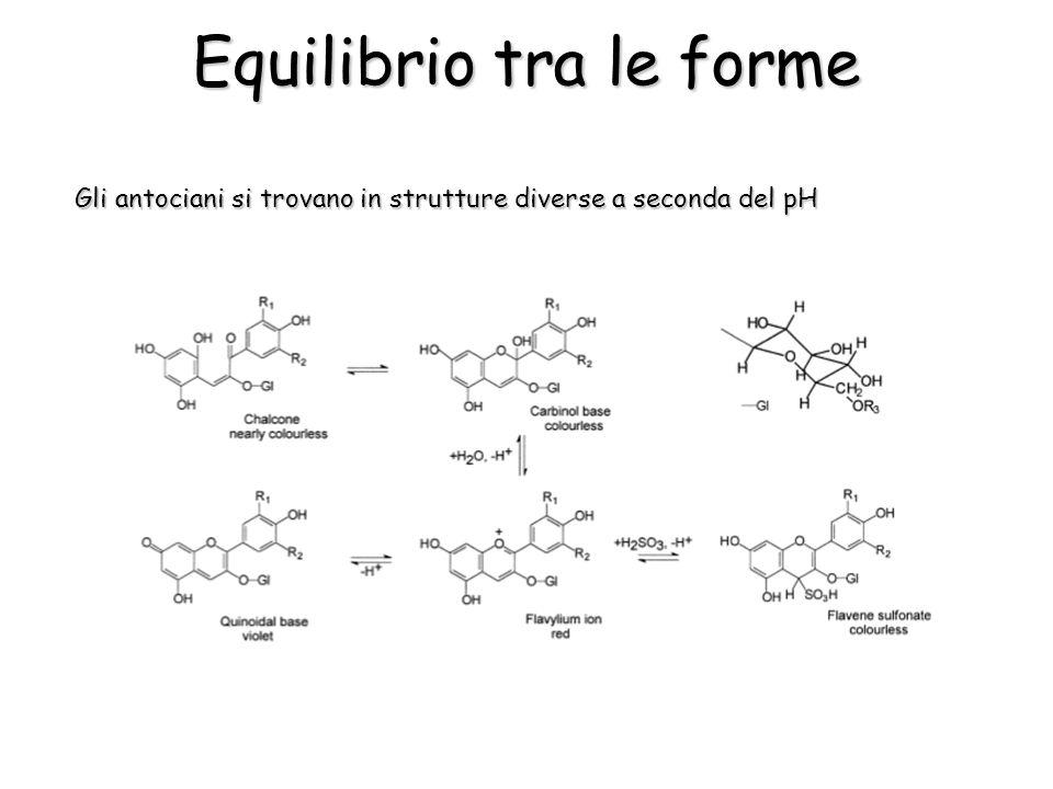 Gli antociani si trovano in strutture diverse a seconda del pH Equilibrio tra le forme