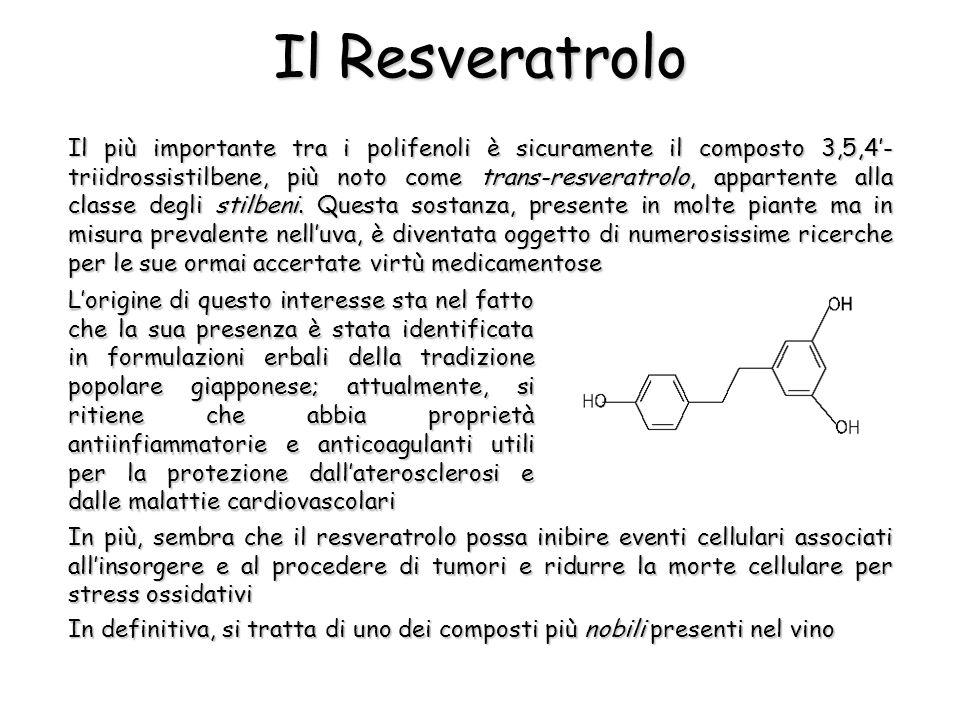 Il più importante tra i polifenoli è sicuramente il composto 3,5,4- triidrossistilbene, più noto come trans-resveratrolo, appartente alla classe degli