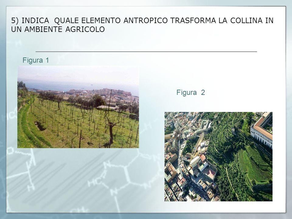 5) INDICA QUALE ELEMENTO ANTROPICO TRASFORMA LA COLLINA IN UN AMBIENTE AGRICOLO Figura 1 Figura 2 Figura 3