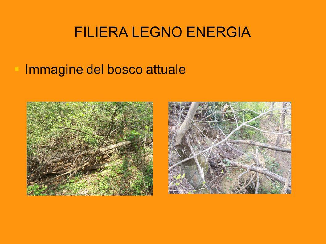 FILIERA LEGNO ENERGIA Immagine del bosco attuale