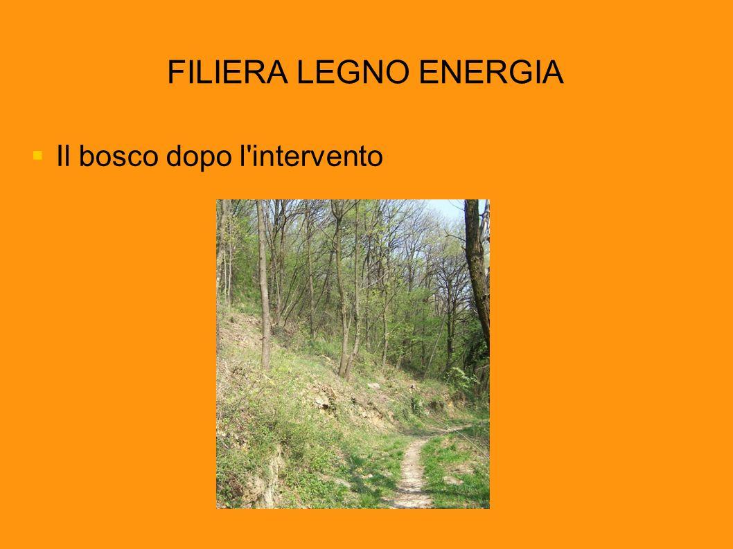 FILIERA LEGNO ENERGIA Il bosco dopo l'intervento