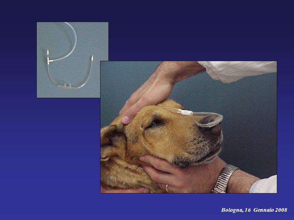 Emostasi e immobilizzazione paziente - sedazione