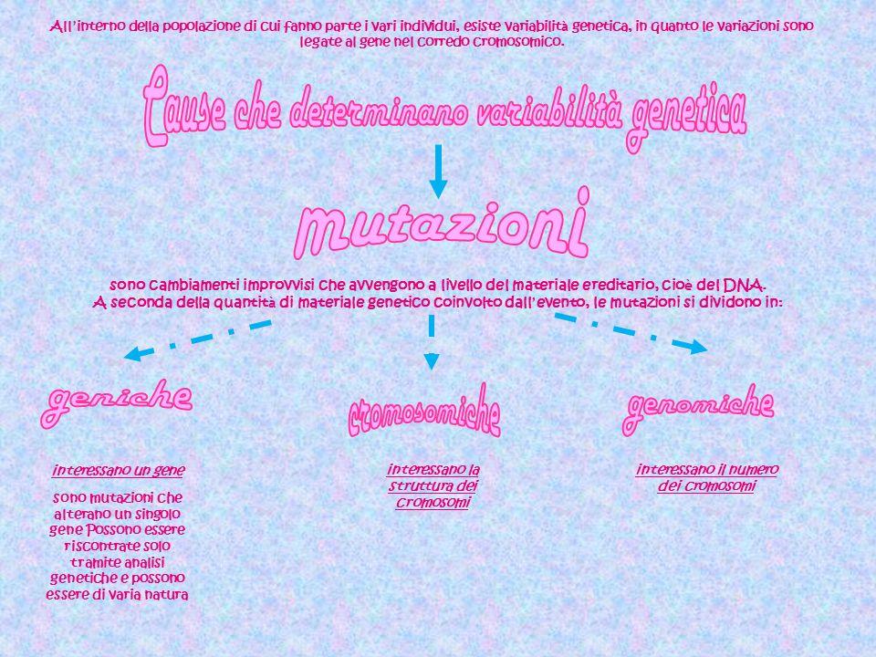 Ovvero la mutazione di un solo codone (sequenza di 3 nucleotidi ) prevedono la sostituzione allinterno di un codone che comporta il cambiamento dellaminoacido codificato e di conseguenza la lettura del messaggio.