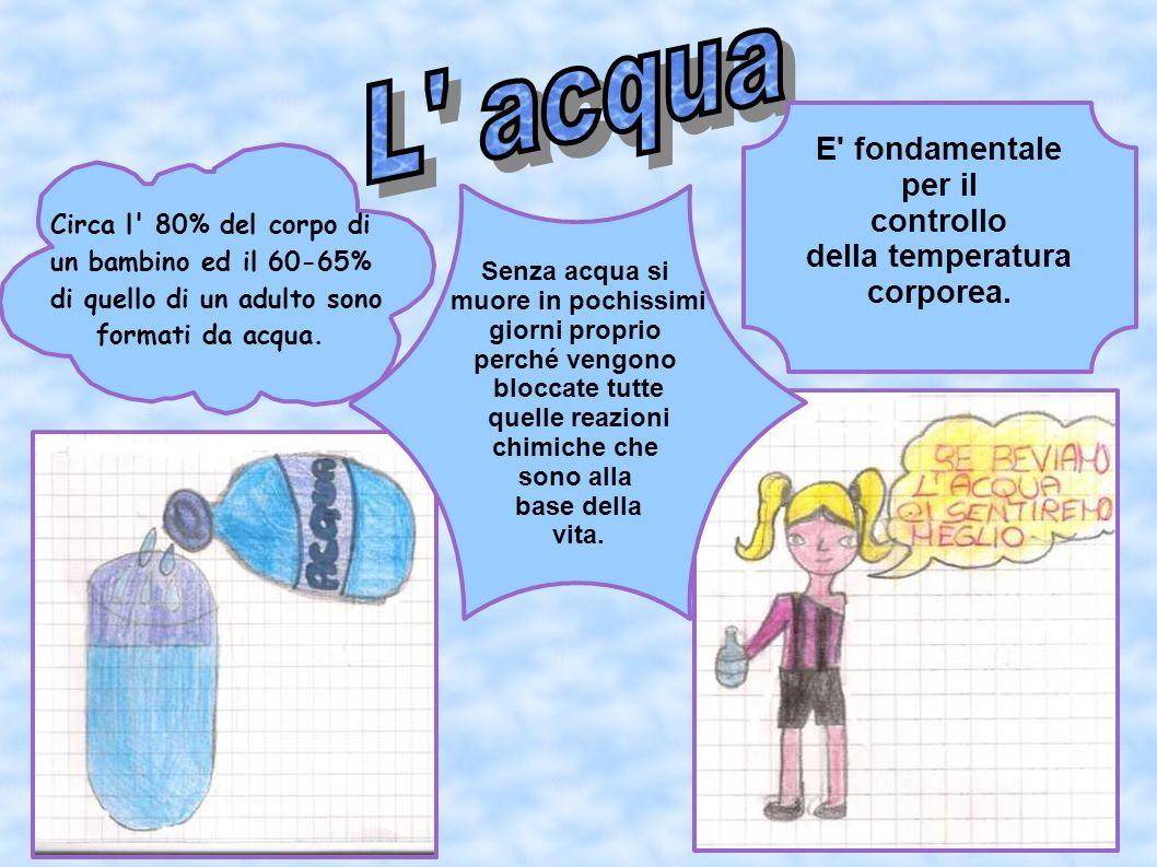Circa l' 80% del corpo di un bambino ed il 60-65% di quello di un adulto sono formati da acqua. E' fondamentale per il controllo della temperatura cor