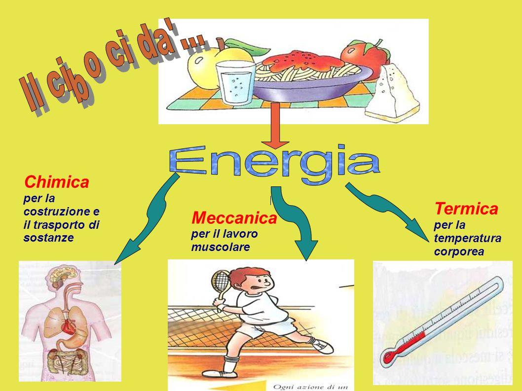 Chimica per la costruzione e il trasporto di sostanze Meccanica per il lavoro muscolare Termica per la temperatura corporea