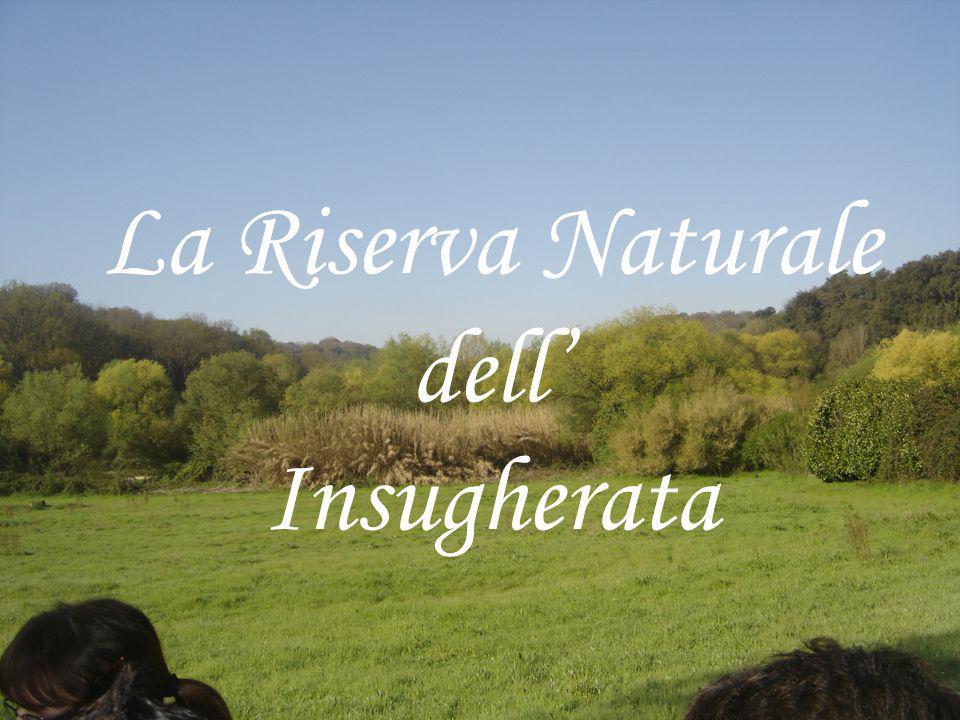 LA RISERVA Con i suoi 700 ettari, è una delle riserve con maggiore biodiversità dellarea Romana; Possiamo notare diversi ambienti partendo ad esempio dai boschi alle paludi melmose sino ad arrivare alle zone umide.