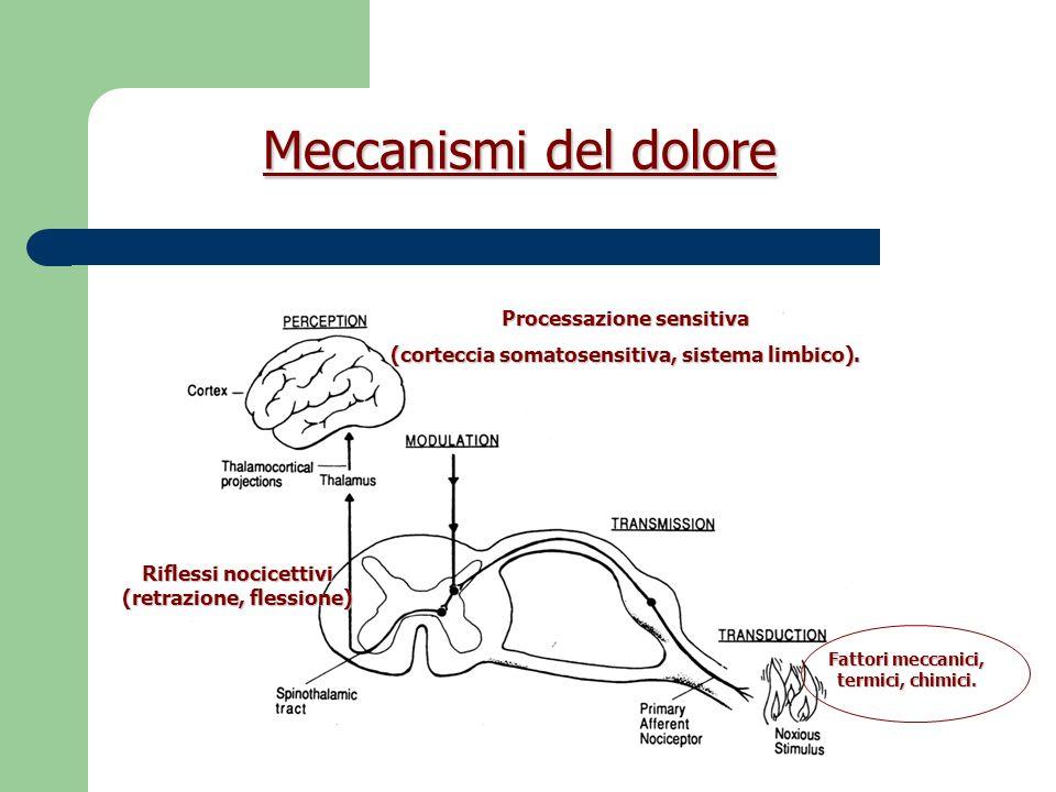 Meccanismi del dolore PROCESSAZIONE del DOLORE Discriminativo-sensitiva.