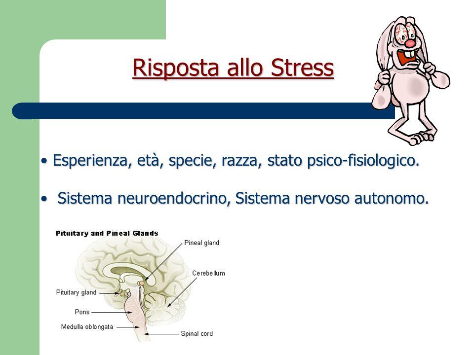 Meccanismi del dolore PERCEZIONE DEL DOLORE Corteccia cerebrale e strutture subcorticali funzionali ANIMALE ANESTETIZZATO O INCOSCIENTE