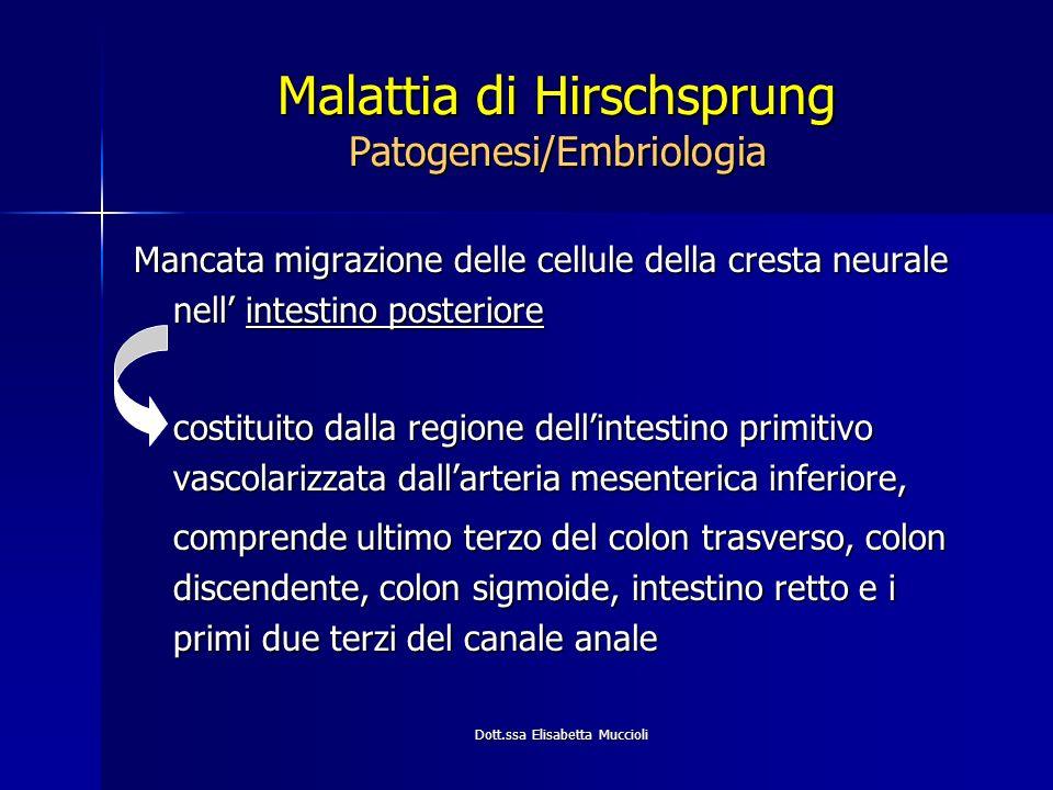 Dott.ssa Elisabetta Muccioli Malattia di Hirschsprung Patogenesi/Embriologia Mancata migrazione delle cellule della cresta neurale nell intestino post