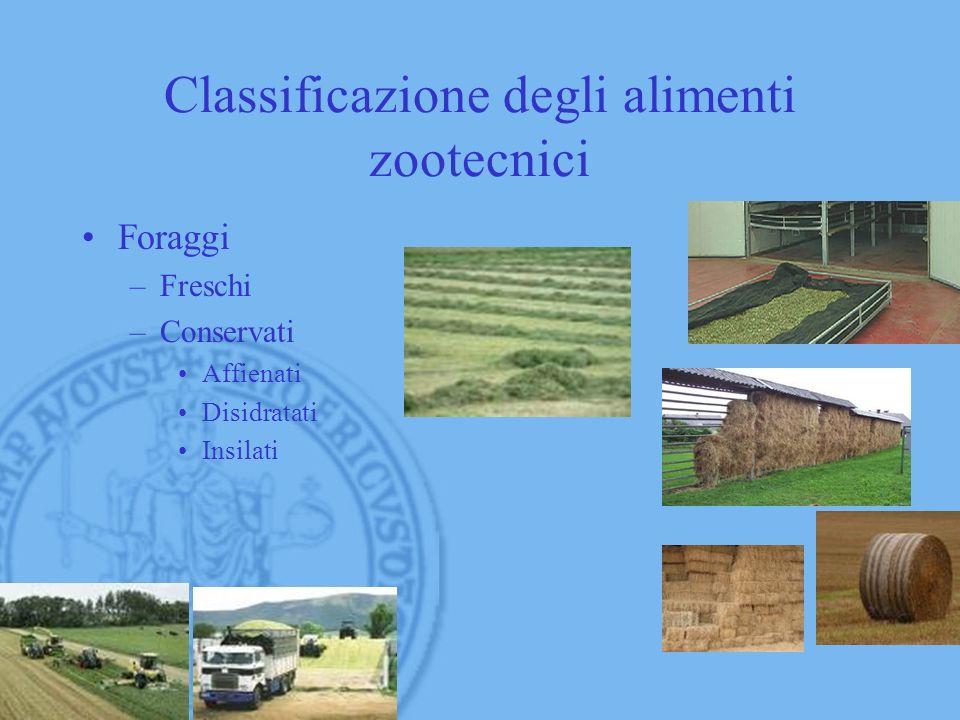 Classificazione degli alimenti zootecnici Foraggi –Freschi –Conservati Affienati Disidratati Insilati