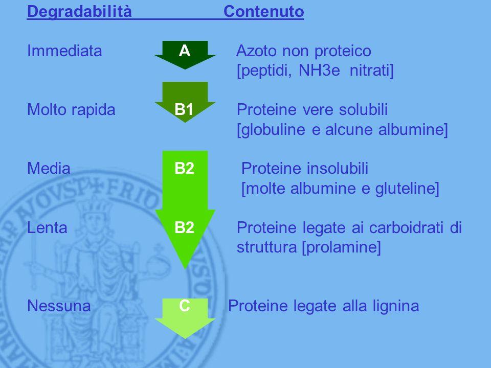 DegradabilitàContenuto Immediata A Azoto non proteico [peptidi, NH3e nitrati] Molto rapidaB1 Proteine vere solubili [globuline e alcune albumine] Medi