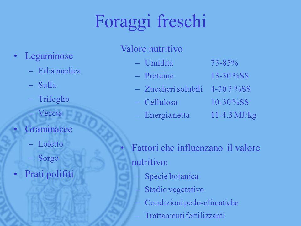 Foraggi freschi Leguminose –Erba medica –Sulla –Trifoglio –Veccia Graminacee –Loietto –Sorgo Prati polifiti Valore nutritivo –Umidità75-85% –Proteine1