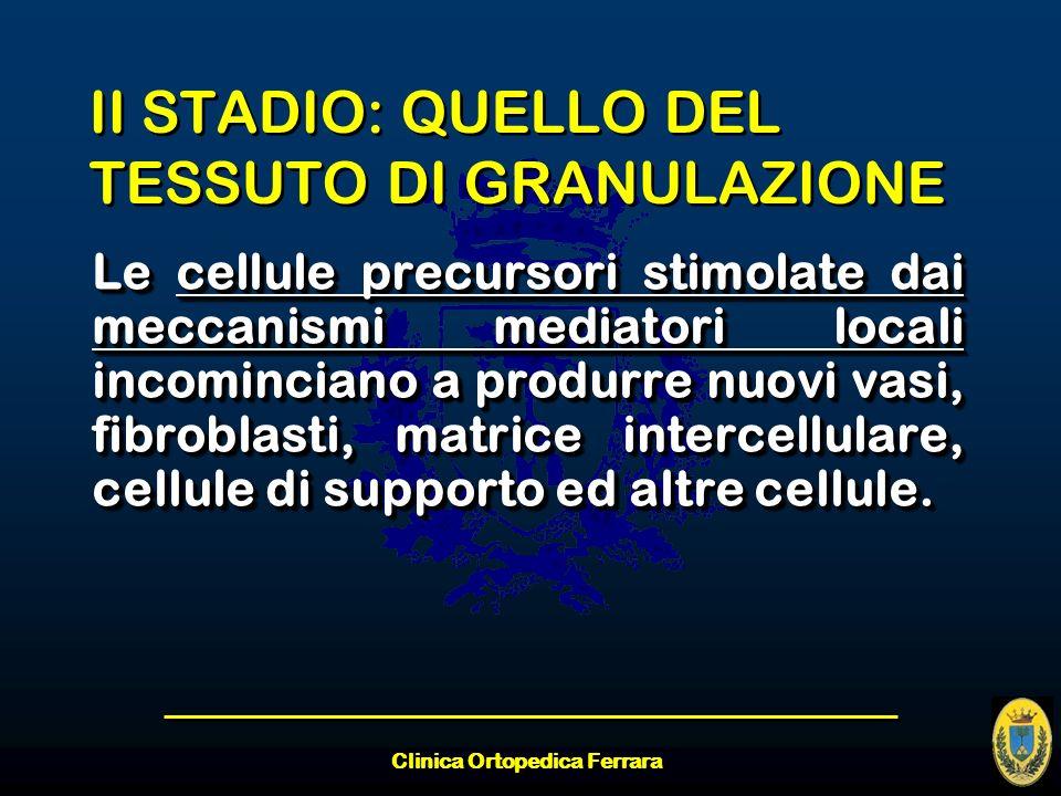 Clinica Ortopedica Ferrara II STADIO: QUELLO DEL TESSUTO DI GRANULAZIONE Le cellule precursori stimolate dai meccanismi mediatori locali incominciano