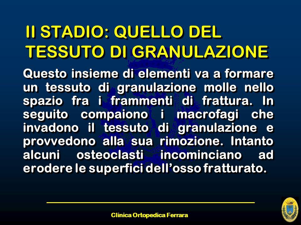 Clinica Ortopedica Ferrara II STADIO: QUELLO DEL TESSUTO DI GRANULAZIONE Questo insieme di elementi va a formare un tessuto di granulazione molle nell