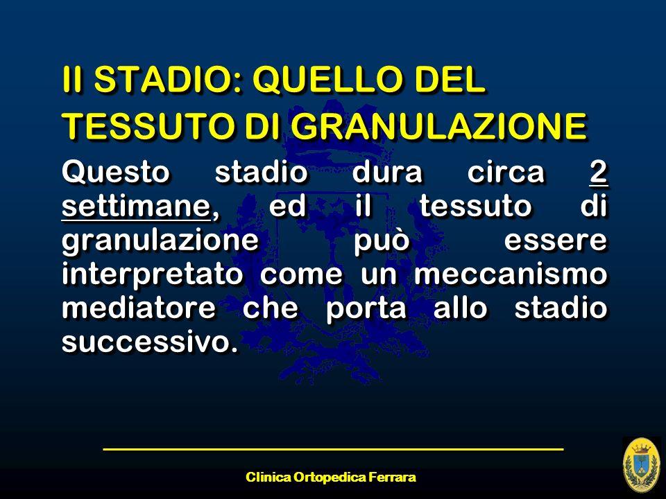 Clinica Ortopedica Ferrara II STADIO: QUELLO DEL TESSUTO DI GRANULAZIONE Questo stadio dura circa 2 settimane, ed il tessuto di granulazione può esser