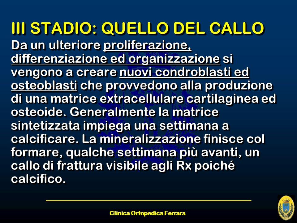 Clinica Ortopedica Ferrara III STADIO: QUELLO DEL CALLO Da un ulteriore proliferazione, differenziazione ed organizzazione si vengono a creare nuovi c