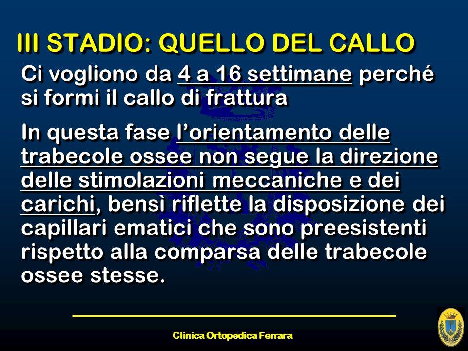 Clinica Ortopedica Ferrara III STADIO: QUELLO DEL CALLO Ci vogliono da 4 a 16 settimane perché si formi il callo di frattura In questa fase lorientame