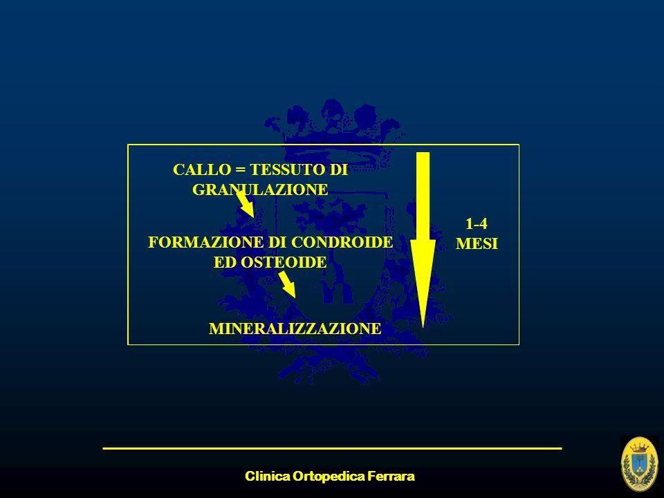 Clinica Ortopedica Ferrara CALLO = TESSUTO DI GRANULAZIONE FORMAZIONE DI CONDROIDE ED OSTEOIDE MINERALIZZAZIONE 1-4 MESI