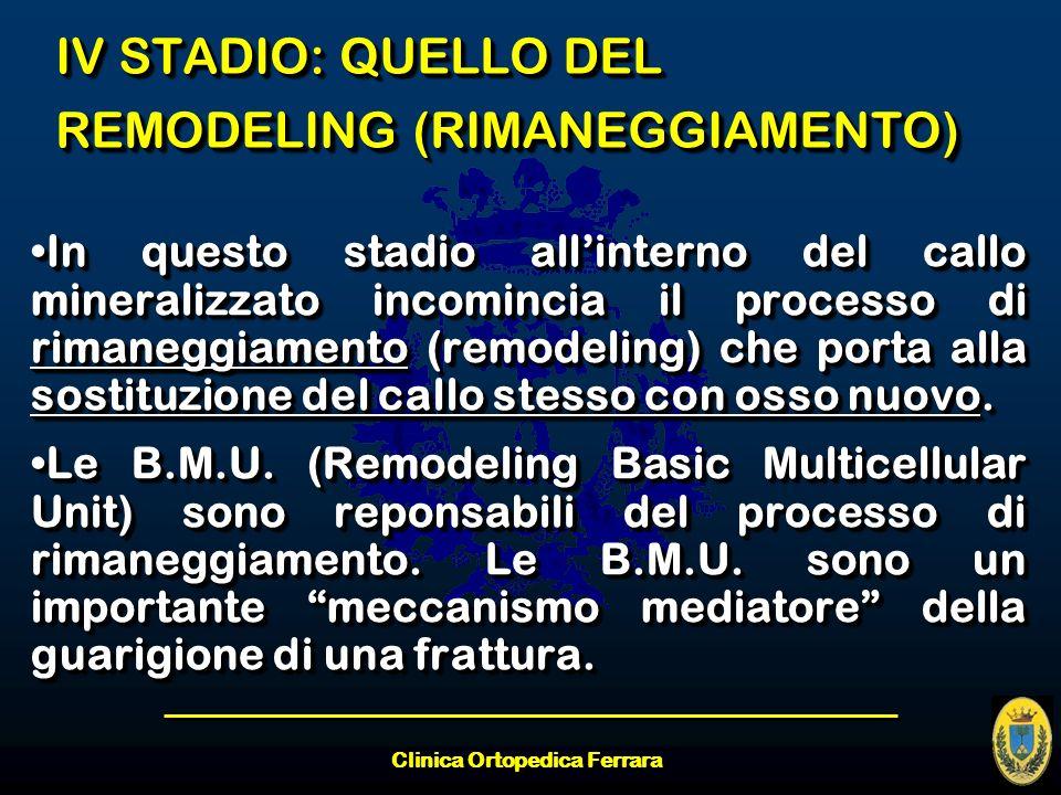 Clinica Ortopedica Ferrara IV STADIO: QUELLO DEL REMODELING (RIMANEGGIAMENTO) In questo stadio allinterno del callo mineralizzato incomincia il proces