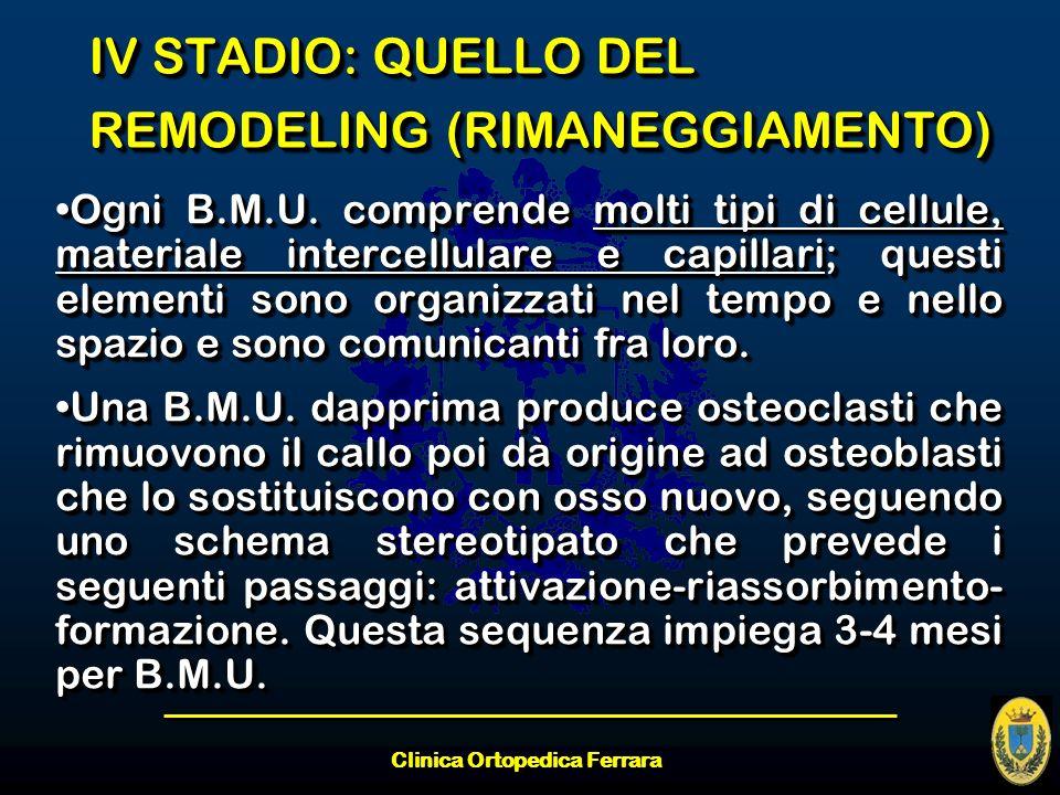 Clinica Ortopedica Ferrara IV STADIO: QUELLO DEL REMODELING (RIMANEGGIAMENTO) Ogni B.M.U. comprende molti tipi di cellule, materiale intercellulare e