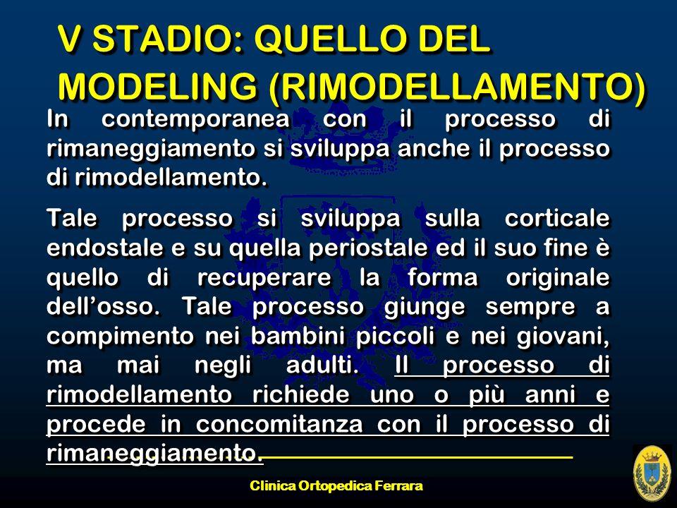 Clinica Ortopedica Ferrara V STADIO: QUELLO DEL MODELING (RIMODELLAMENTO) In contemporanea con il processo di rimaneggiamento si sviluppa anche il pro