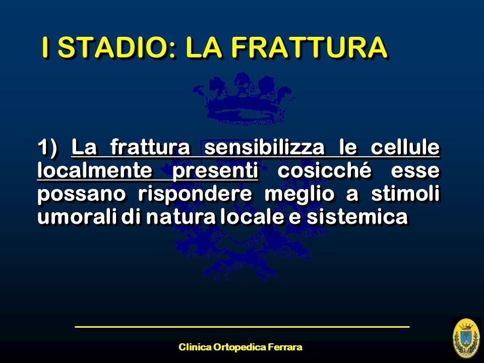 Clinica Ortopedica Ferrara I STADIO: LA FRATTURA 1) La frattura sensibilizza le cellule localmente presenti cosicché esse possano rispondere meglio a