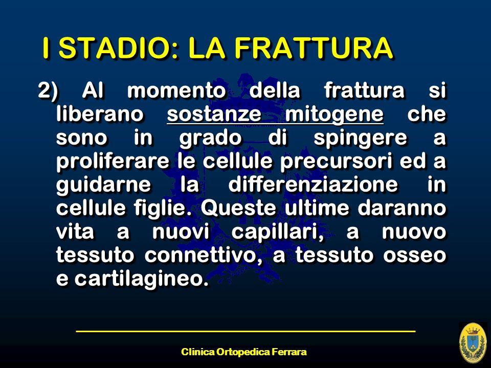 Clinica Ortopedica Ferrara I STADIO: LA FRATTURA 2) Al momento della frattura si liberano che sono in grado di spingere a proliferare le cellule precu