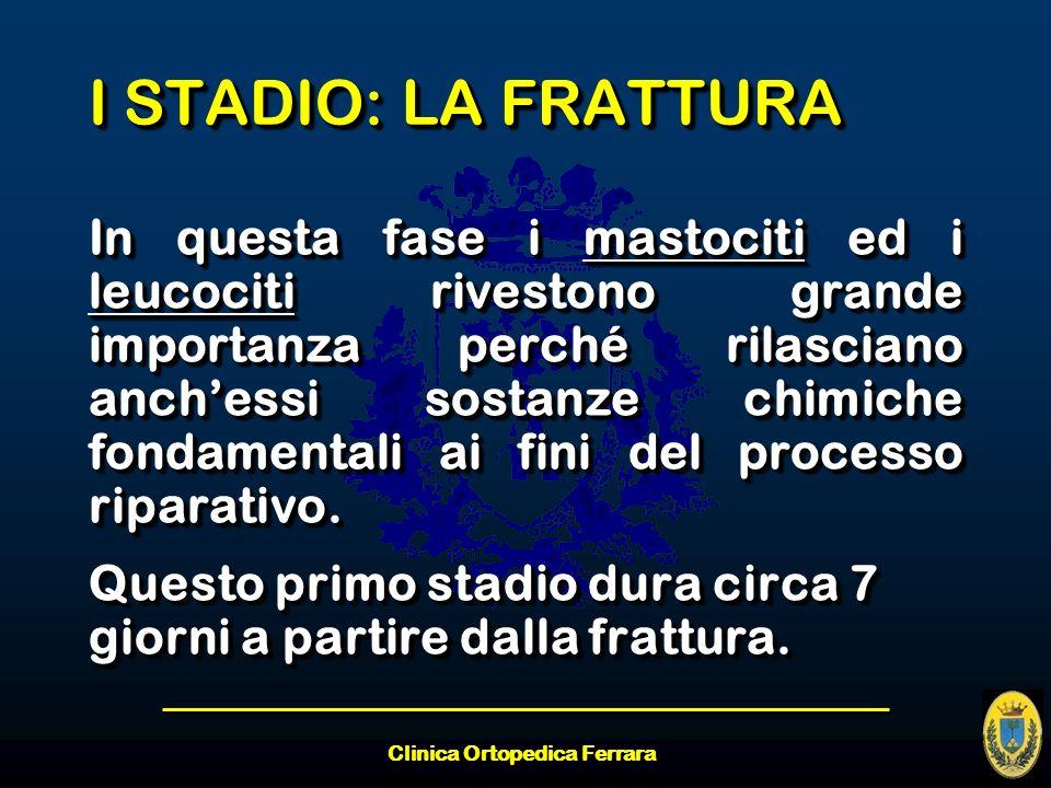 Clinica Ortopedica Ferrara I STADIO: LA FRATTURA In questa fase i mastociti ed i leucociti rivestono grande importanza perché rilasciano anchessi sost