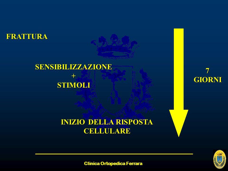 Clinica Ortopedica Ferrara FRATTURA SENSIBILIZZAZIONE+STIMOLI INIZIO DELLA RISPOSTA CELLULARE 7GIORNI