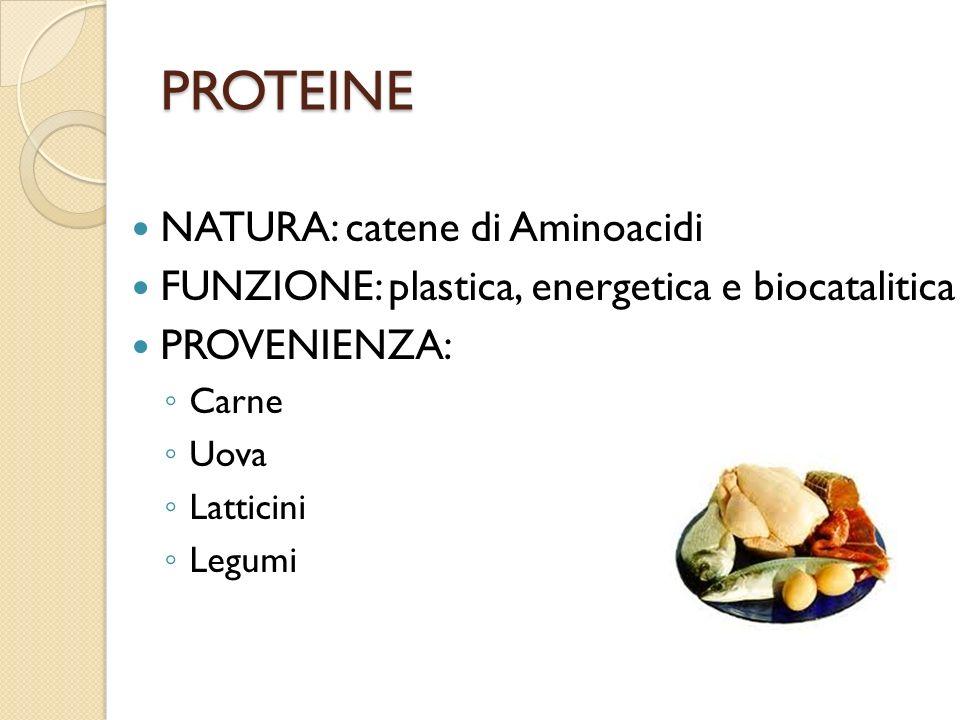 PROTEINE NATURA: catene di Aminoacidi FUNZIONE: plastica, energetica e biocatalitica PROVENIENZA: Carne Uova Latticini Legumi