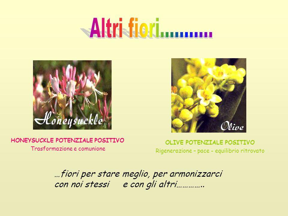 HONEYSUCKLE POTENZIALE POSITIVO Trasformazione e comunione OLIVE POTENZIALE POSITIVO Rigenerazione – pace - equilibrio ritrovato …fiori per stare megl