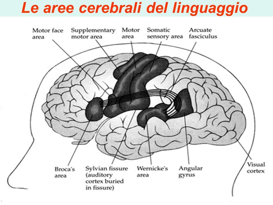 Altri studi hanno rilevato in presenza di dislessia: Danneggiamenti a livello di emisfero cerebrale sinistro Esami con RMN confermano alterazioni stru