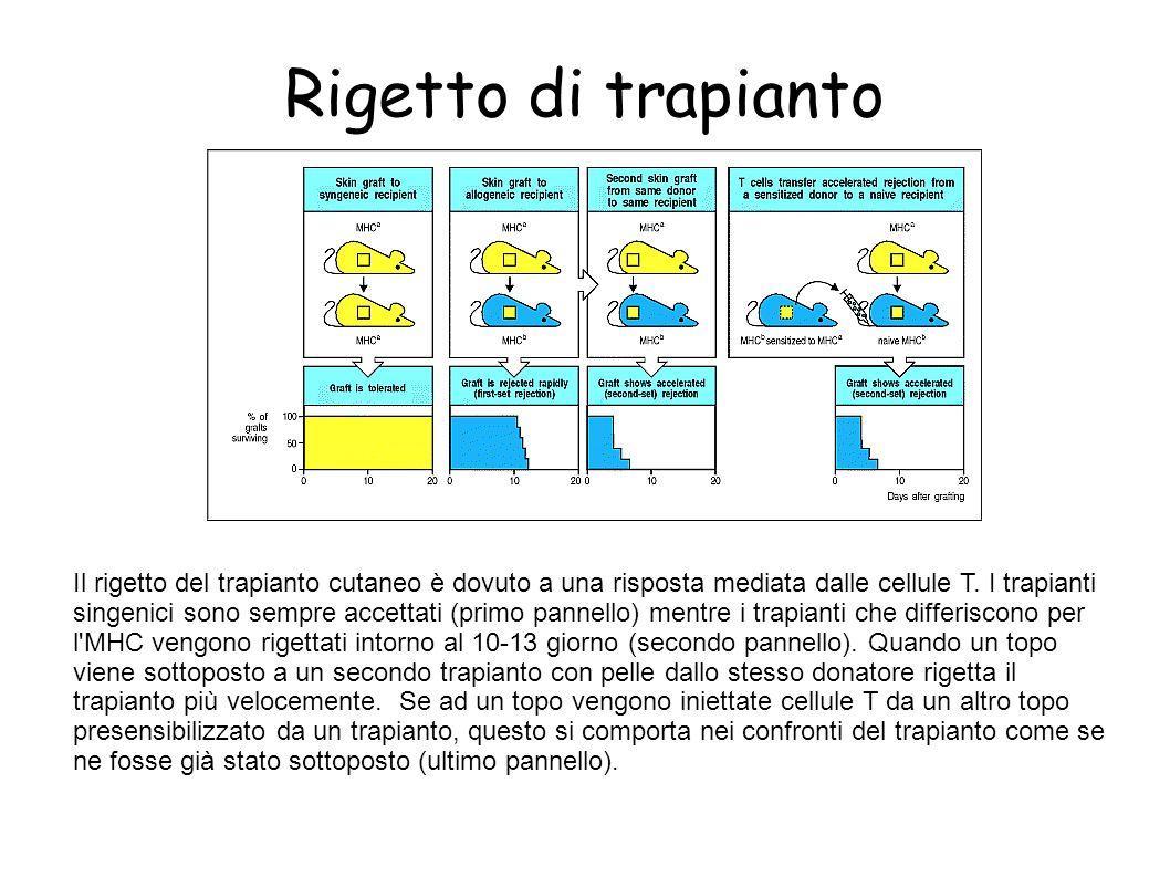 Rigetto di trapianto Il rigetto del trapianto cutaneo è dovuto a una risposta mediata dalle cellule T. I trapianti singenici sono sempre accettati (pr