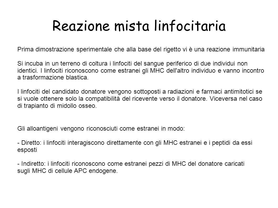 Via diretta: le molecole MHCI e II del donatore sono riconosciute dalle cellule T del ricevente.
