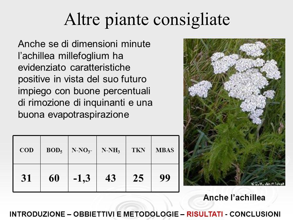 Altre piante consigliate Anche se di dimensioni minute lachillea millefoglium ha evidenziato caratteristiche positive in vista del suo futuro impiego