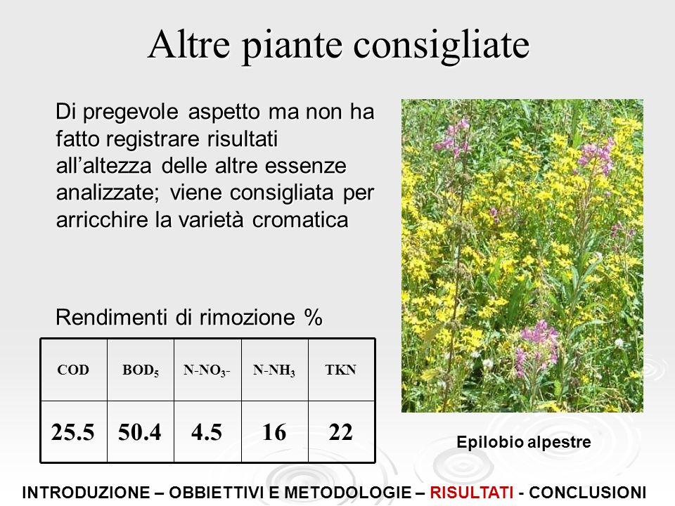Altre piante consigliate Di pregevole aspetto ma non ha fatto registrare risultati allaltezza delle altre essenze analizzate; viene consigliata per ar