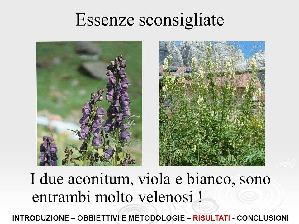 Essenze sconsigliate I due aconitum, viola e bianco, sono entrambi molto velenosi ! I due aconitum, viola e bianco, sono entrambi molto velenosi ! INT