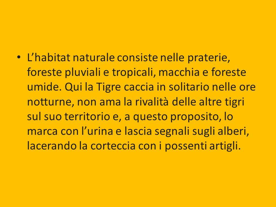 Lhabitat naturale consiste nelle praterie, foreste pluviali e tropicali, macchia e foreste umide. Qui la Tigre caccia in solitario nelle ore notturne,